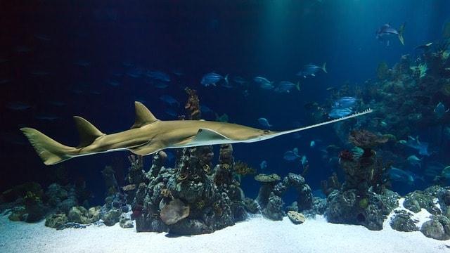 London Aquarium i London