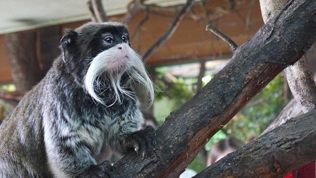 Dyr på London Zoo